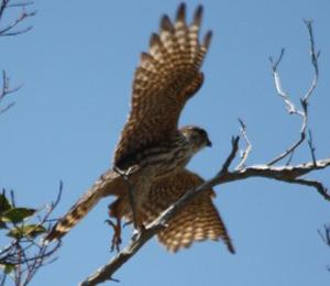 Fort Jefferson Bird Watching