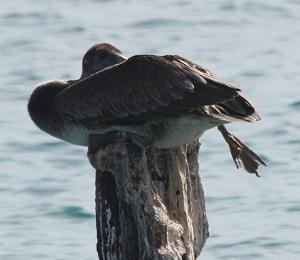Birds Migrate In October