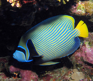 The Reef Fish