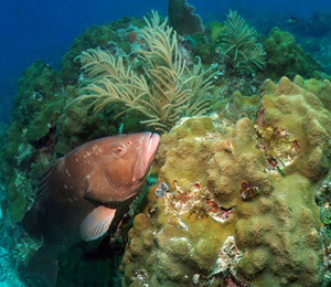 The Tortugas Bank Coral Reef