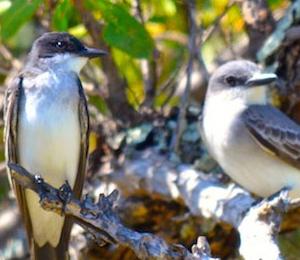 Bird Watching Checklist: The Dry Tortugas