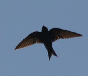Bird action in September
